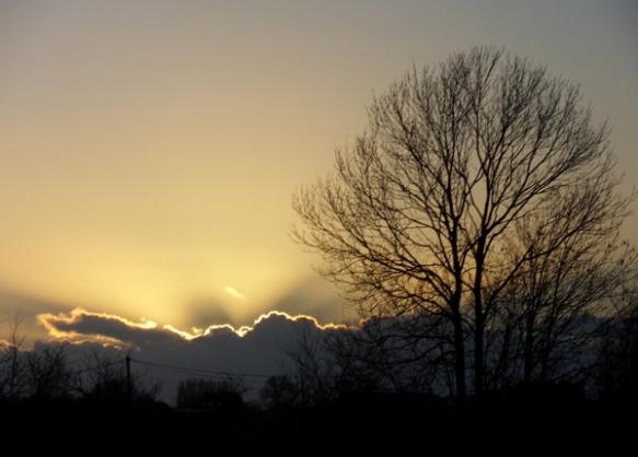 Soleil se couchant derrière un nuage - Arbre en hiver à contre jour sur la droite.