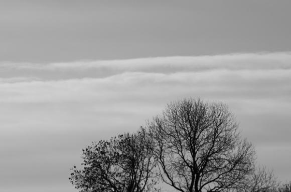 Silhouettes d'arbres en hiver - Monts des Flandres
