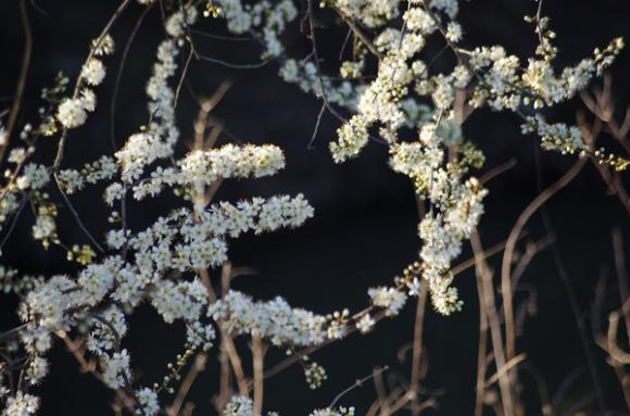 Fleurs -  Balade de Leo 2014
