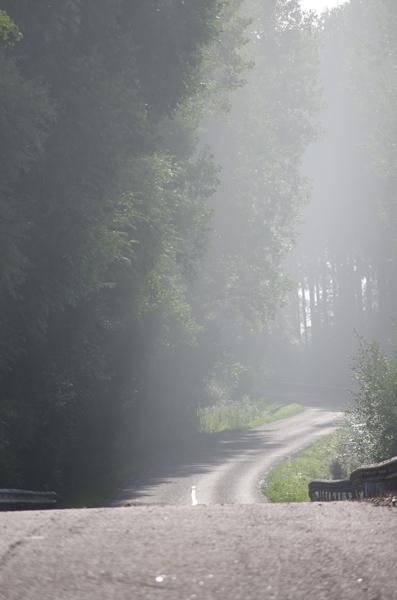 Route et Brume