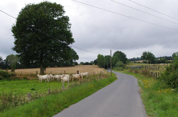 Route et troupeau de vaches