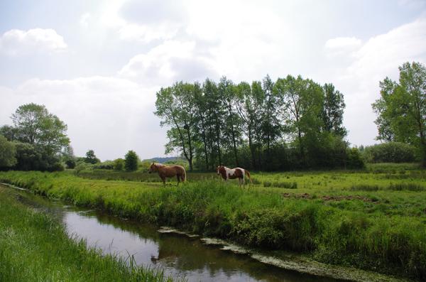 Vallée de l'Authie - Chevaux