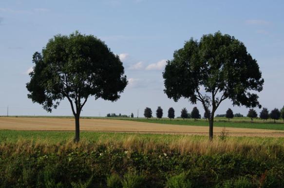 Lille Gand 47