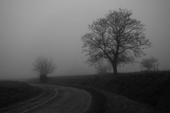 Paysages dans la brume -  8